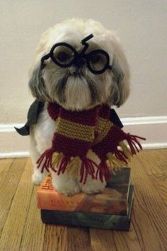 Oh come on, it's dressed like Harry Potter how could you NOT want it?