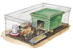 """Use these simple plans to construct your own incredibly versatile brooder box. You can set it up to house a broody hen or to raise mail-order chicks, you can use it inside or outdoors, and — best of all — you can build it on the """"cheep."""""""