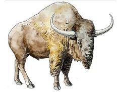 Ice Age Mammals found in Colorado - ABC News
