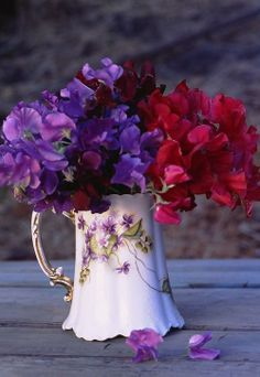 Sweet peas in a beautiful antique container