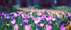 Spring Flower Facebook Cover Facebook Covers