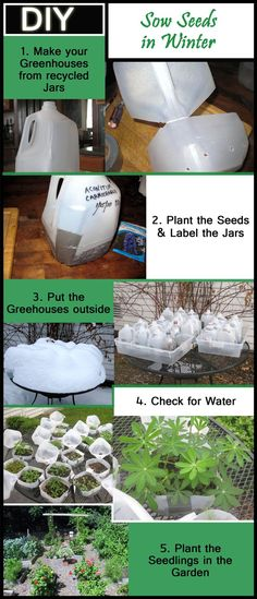 Winter Sowing is an innovative method to sow seeds and is presented here as a 5-steps DIY! Doing it now saves time for other spring tasks to come.