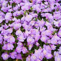 125 best zone 10 images on pinterest landscaping ideas backyard 13 of the best ground cover perennials for your yard mightylinksfo