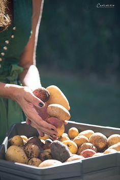 Paul Potato: Kartoffelernte{Zeit} Stuffed Mushrooms, Vegetables, Food, Ad Home, Stuff Mushrooms, Essen, Vegetable Recipes, Meals, Yemek