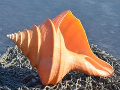 seashell and sea - Hledat Googlem