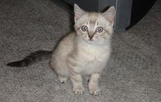 How Not To Kidnap A Cat | Susan Harris
