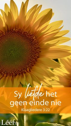 Hart, Afrikaans, Good Morning, Encouragement, Quotes, Buen Dia, Quotations, Bonjour, Good Morning Wishes