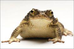 特集:地球のいのち 絶滅危惧種 2009年1月号 ナショナルジオグラフィック NATIONAL GEOGRAPHIC.JP