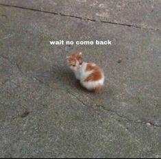Funny Animal Jokes, Cute Funny Animals, Animal Memes, Cute Baby Animals, Funny Cute, Stupid Funny Memes, Funny Relatable Memes, Cute Love Memes, Cute Cat Memes