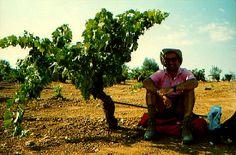 Finding shade on the Via de la Plata - under a grape vine