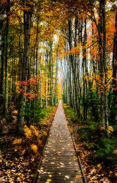 ***Fall color in Acadia National Park (Maine) by Michael Steighner cr.c.