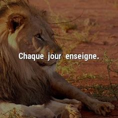 Idriss Aberkane, Pinterest Twitter, Plus Belle Citation, French Quotes, Quotes And Notes, Positive Life, Empire, Stress, Marketing