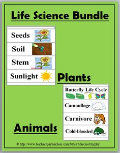 Life Science Word Wall Cards (Animals and Plants)
