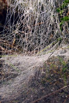 Fine Webs (even if you can't find the spider) // photo by Andrew Kearton