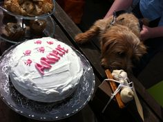 Quick and Easy Dog Birthday Cake Recipes for your dog's party. Plus recipes for Dog Birthday Dog Cup Cakes and Cookies