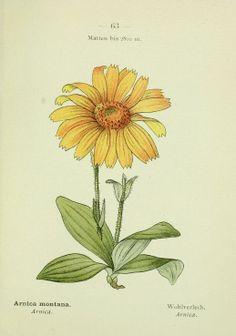 Alpen-Flora : - Biodiversity Heritage Library