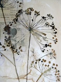 honesty seed drawings - Google Search