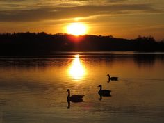 Sunset @Ann Arbor by Eleonora Porcu - Photo 68408937 / 500px