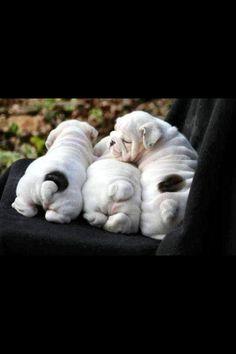 Cute little puppy bums!