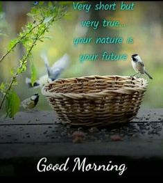 Morning Greeting, Good Morning Quotes, Nature, Naturaleza, Outdoors, Mother Nature, Natural
