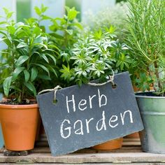 What Herbs Should I Plant in My Garden? Eight Useful Ones to Grow | Apartment Therapy