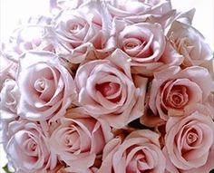 Candy Bianca - Standard Rose - Roses - Flowers by category | Sierra Flower Finder