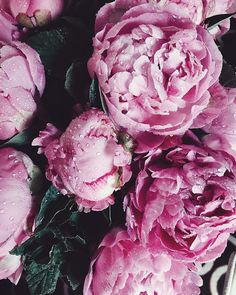 By: Alina kolot Fresh Flowers, Pink Flowers, Beautiful Flowers, Blooming Flowers, Beautiful Pictures, My Flower, Flower Power, Flower Phone Wallpaper, Flower Aesthetic