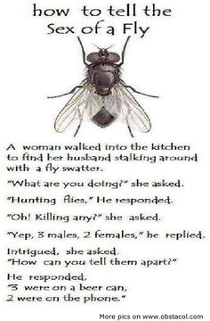 How to tell the Sex of a Fly ~