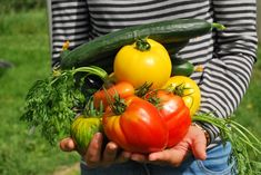 Vegetable Gardening for Beginners: Learn the basics of planting a garden, from planning out and designing the garden space to choosing the best vegetables to grow in your area. Gardening advice from The Old Farmer's Almanac. Starting A Vegetable Garden, Vegetable Garden For Beginners, Gardening For Beginners, Gardening Tips, Vegetable Gardening, Garden Soil, Garden Seeds, Edible Garden, Easy Garden