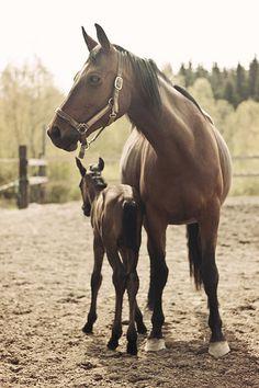 So heartwarmingly sweet. #horses #animals
