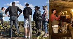Visite des vignes et dégustations #tourisme #campingcar