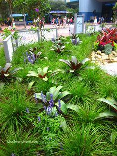 Plant combinations with Imperialis Bromeliad, Alcantarea imperialis, and Lomandra 'Breeze'