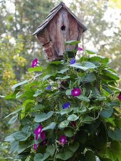 Welcome Wildlife! Asst. colors of morning glories trailing up a rustic birdhouse for hole-nesting species, e.g. bluebirds and wrens. by Hercio Dias