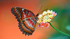 Butterfly On Flower HD Wallpapers