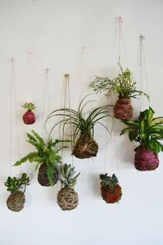 DIY instructions for making string gardens.  Not the only way to do it, but sounds like a good approach.
