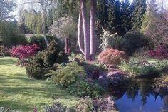 Acer landscape garden project UK