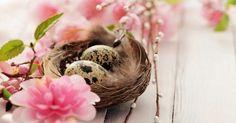 Перепелиные яйца спасут кожу от старости