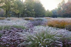 Stimmungsvoll: bunte Blätter, zarte Halme und Gräser