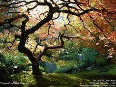 Japanese Garden in Portland, USA