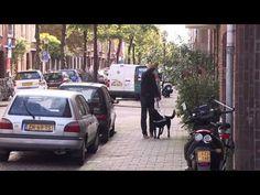 Bedrijfsfilm KNGF Geleidehonden - alles over onze verschillende typen honden en het belangrijke werk van onze vrijwilligers.