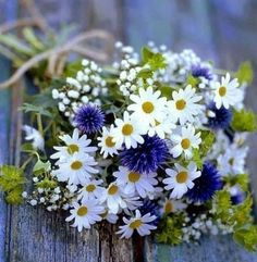 Daisy and Cornflower Bouquet wedding country simple bouquet daisy mix Daisy Bouquet Wedding, Wedding Flowers, Bridal Bouquets, Daisies Bouquet, Bridesmaid Bouquets, Cornflower Wedding Bouquet, Thistle Bouquet, Gypsophila Bouquet, Bridesmaids