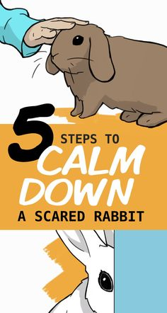 Pet Bunny Rabbits, Lop Bunnies, Funny Bunnies, Pet Rabbit, Bunny Rescue, Rabbit Facts, Rabbit Behavior, Cute Bunny Pictures, Indoor Rabbit