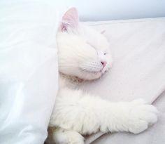 Mono  #cat #pet #puppy #kitty #kitten #love #amor #gato #rabbit #bunny #whitecat #cats #catoftheday #catsofinstagram #gatobranco #gatoblanco #sleep #cozy #family #meow #pretty #cute #selfie #sweet #gorgeous #beauty #beautiful #picoftheday #photooftheday #catlover by @on_off_erica