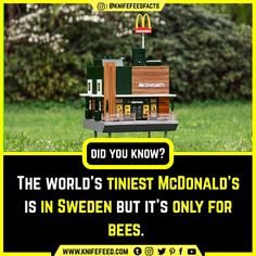 The world's tiniest McDonald's is in Sweden but it's only for bees. Wow Facts, Wtf Fun Facts, Random Facts, True Facts, General Knowledge Facts, Knowledge Quotes, Interesting Facts About World, Funny Letters, Shocking Facts