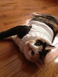 Crocheted cat sweater