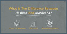 Pot And Hashish Are Made From The Same Plant: The Female Cannabis Plant, Cannabis Sativa. But The Process Of How The Two Are Created And The Results Of Each Are Very Different.