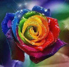 I love rainbow Roses! These are real and SO gorgeous! I wish they could grow like this! Love Rainbow, Rainbow Flowers, Taste The Rainbow, Over The Rainbow, Rainbow Colors, Rainbow Stuff, Rainbow Photo, Rainbow Art, Rainbow Pride