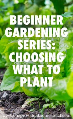 Are you new to gardening? Our beginner gardening series will help answer your questions, including choosing plants for your garden patch.