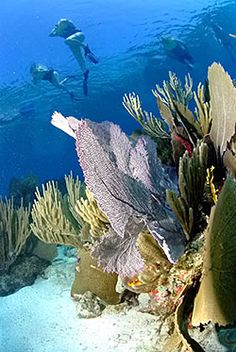 Belize - Some of the best snorkelling I ever did.