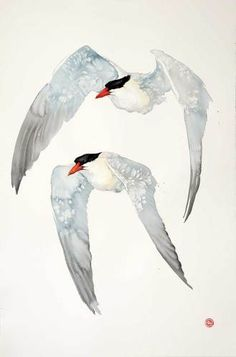 Caspian Terns (Unframed)